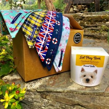 Cornish Dog Bandana Gift Box with dog biscuits